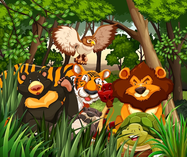 Animais selvagens que vivem na selva