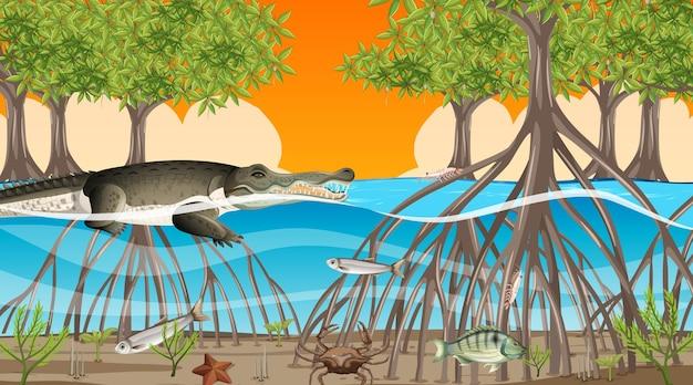Animais vivem na floresta de mangue na cena do pôr do sol