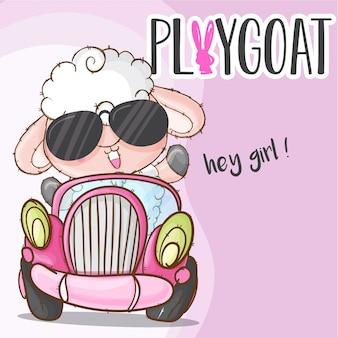 Animal bonito de ovelhas no carro