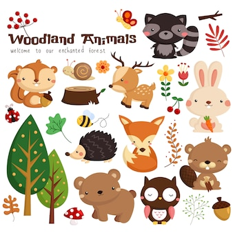Animal da floresta