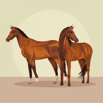 Animal de fazenda de cavalos