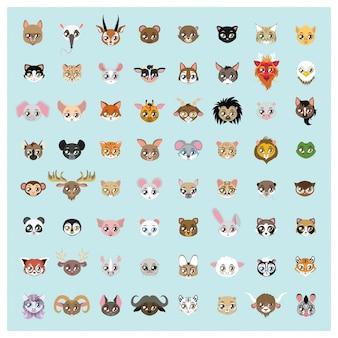 Animal enfrenta coleção