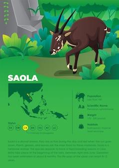 Animal infographic series - saola