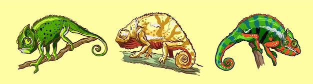 Animal lagarto camaleões.
