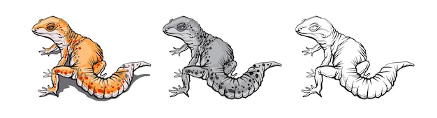 Animal lagarto gecko. réptil da vida selvagem natural isolada no fundo branco.