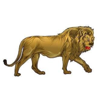 Animal leão na mão de desenho
