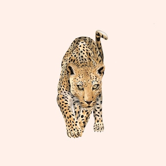 Animal leopardo