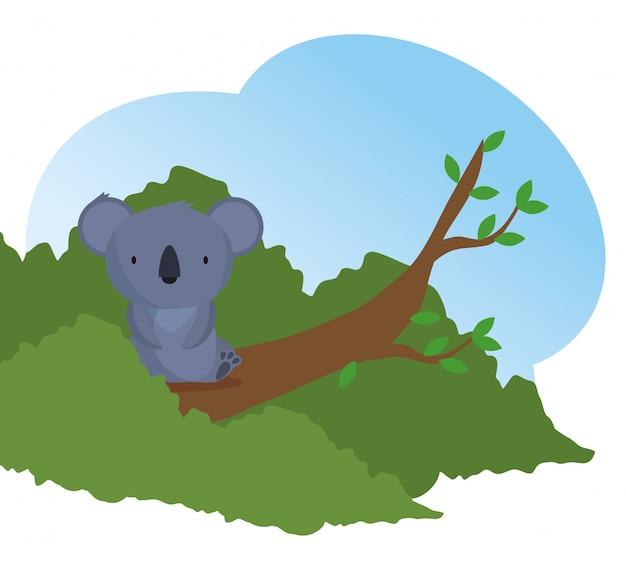 Animal selvagem de coala no galho de árvore