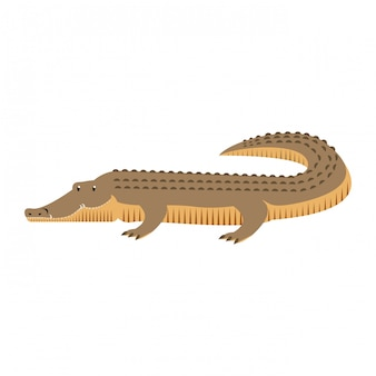 Animal selvagem de cocodrile