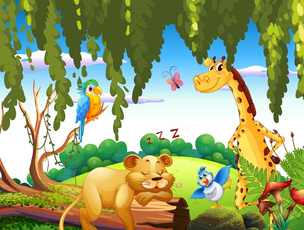Animal selvagem na natureza