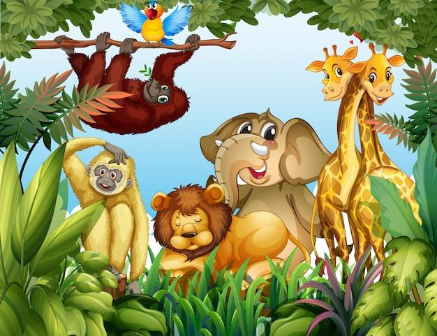 Animal selvagem na selva
