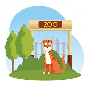 Animal selvagem tigre na reserva do zoológico