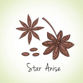 Anis estrelado ervas e especiarias.