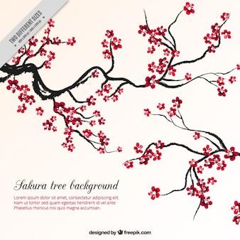 Antecedentes árvore de sakura