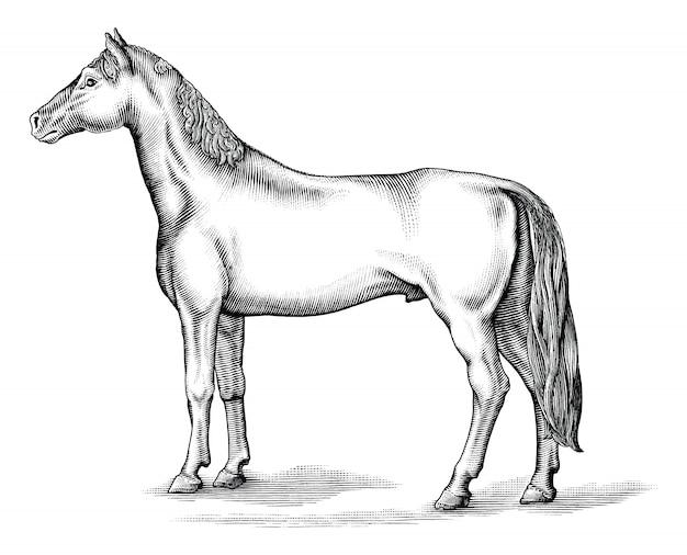 Antiga gravura ilustração de clip-art cavalo preto e branco isolado, desenho estilo vintage de cavalo
