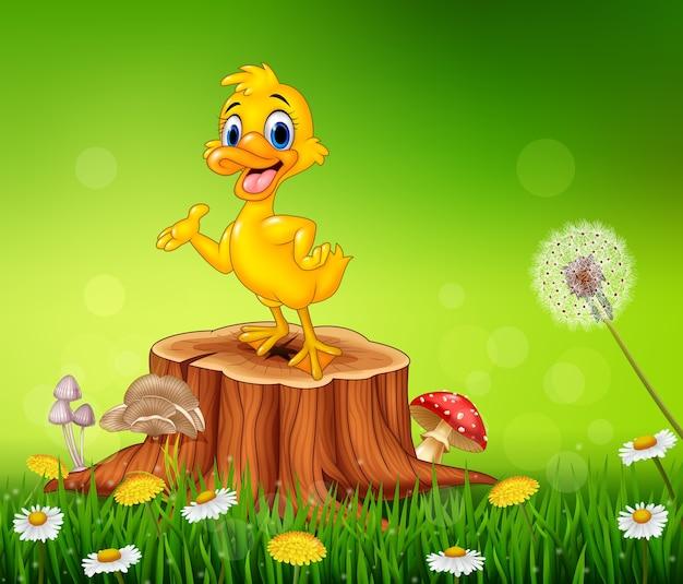 Apresentação de pato engraçado dos desenhos animados