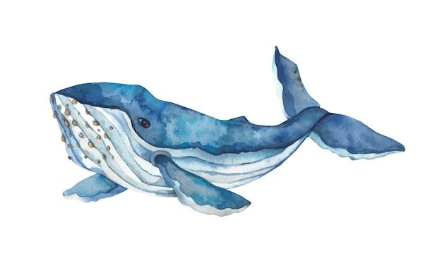 Aquarela baleia azul desenhados à mão.