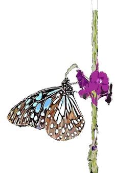 Aquarela borboleta marrom em flor