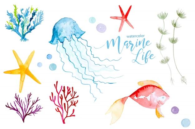 Aquarela colorida conjunto de plantas e animais marinhos
