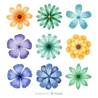 Aquarela colorida flores e folhas coleção