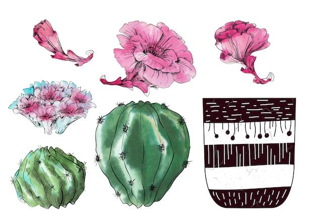 Aquarela conjunto de cactos
