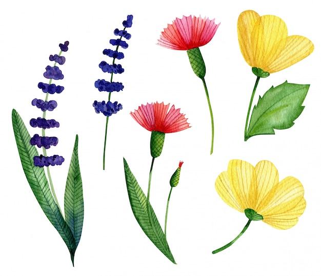 Aquarela conjunto de flores silvestres