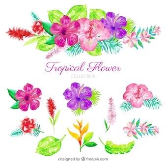 Aquarela conjunto de flores tropicais coloridas