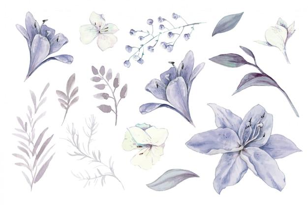 Aquarela conjunto de lírios, brotos e folhas.