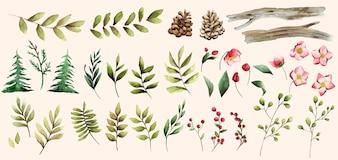 Aquarela conjunto de vetores de flores e folhas de inverno