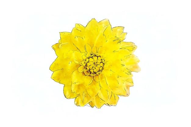 Aquarela dália amarela