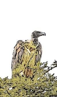 Aquarela de abutre