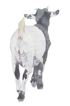 Aquarela de cabra voltada para branco com saltos pretos