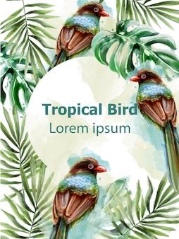 Aquarela de cartão trópico de pássaros coloridos