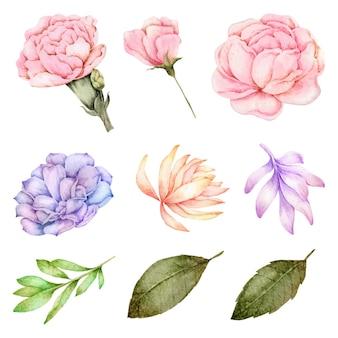 Aquarela de coleção de elementos de flores e folhas