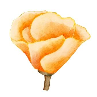 Aquarela de flor amarela