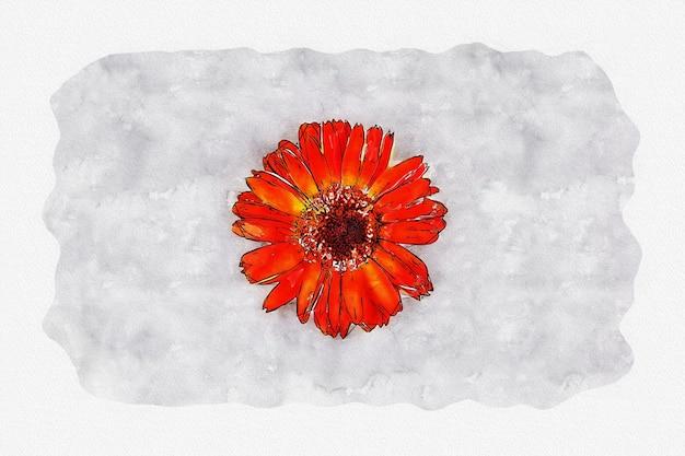 Aquarela de flores de ásteres laranja