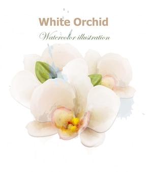 Aquarela de flores de orquídea branca