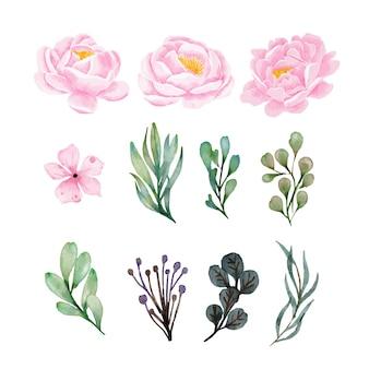 Aquarela de flores de peônias