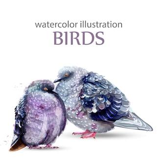 Aquarela de pássaros de pombo
