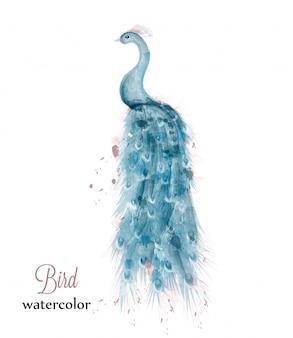 Aquarela de pavão azul