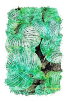 Aquarela de plantas de folha larga