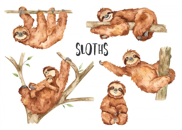 Aquarela de preguiças de animais fofos