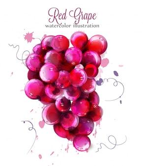 Aquarela de uvas vermelhas