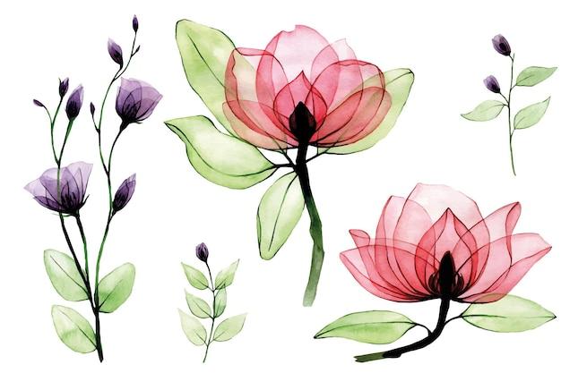 Aquarela definida com flores transparentes, rosas silvestres cor de rosa e flores silvestres roxas em branco