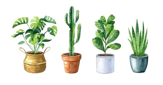 Aquarela definida com plantas caseiras e vasos monstera e cacto de cesta de palha e pote de barro