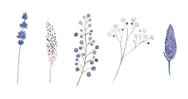 Aquarela desenhada à mão roxa de ervas e flores isoladas