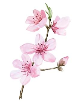 Aquarela desenhando flores rosa sakura