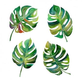 Aquarela design das folhas