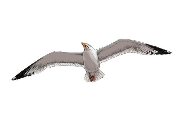 Aquarela gaivota em branco