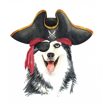Aquarela husky siberiano com venda de pirata e chapéu.